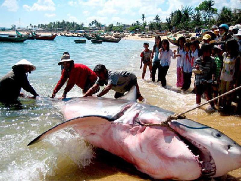 Contatos Mulheres Esgoto Tubarão-8442