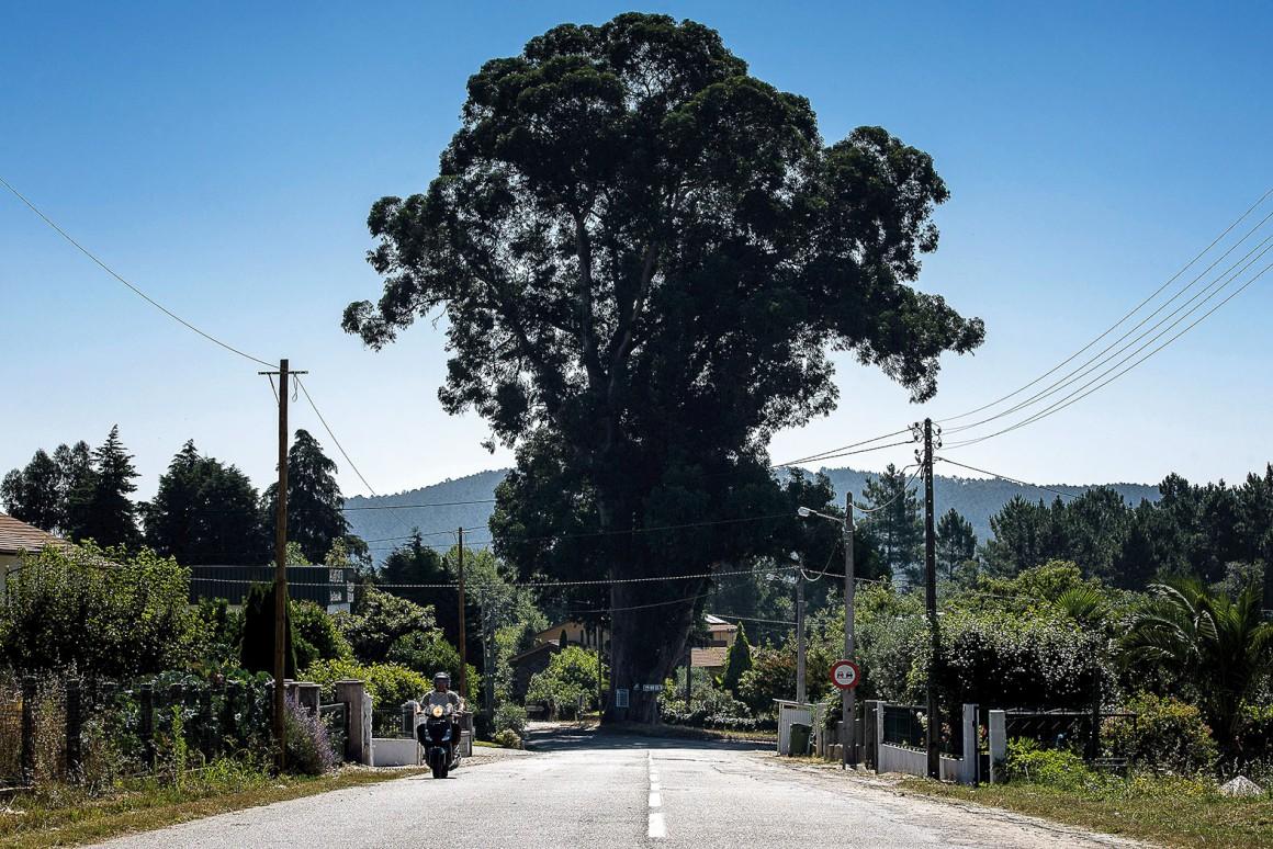 Parque De Lugar De Reunião De Sexo Beja-8680