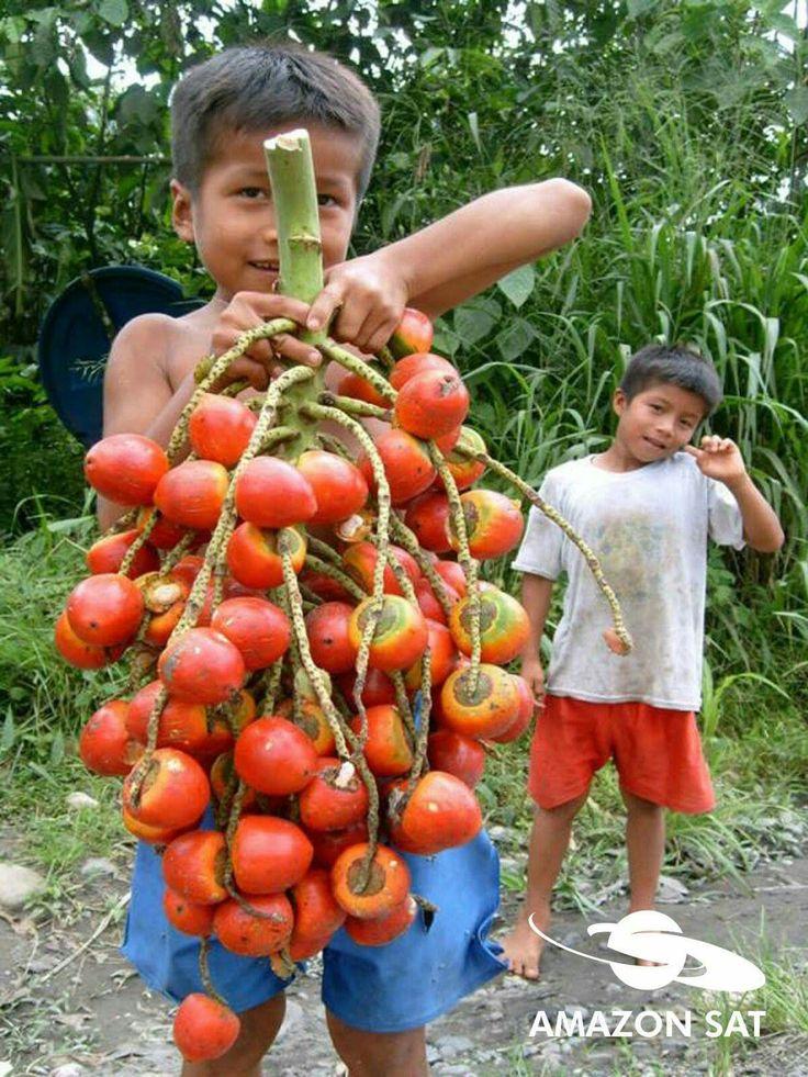 Procuro Mulher Norte Para Casar Dominican Republic-982