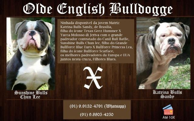 Procuro Nda Para Cão Beagle Paragominas-159